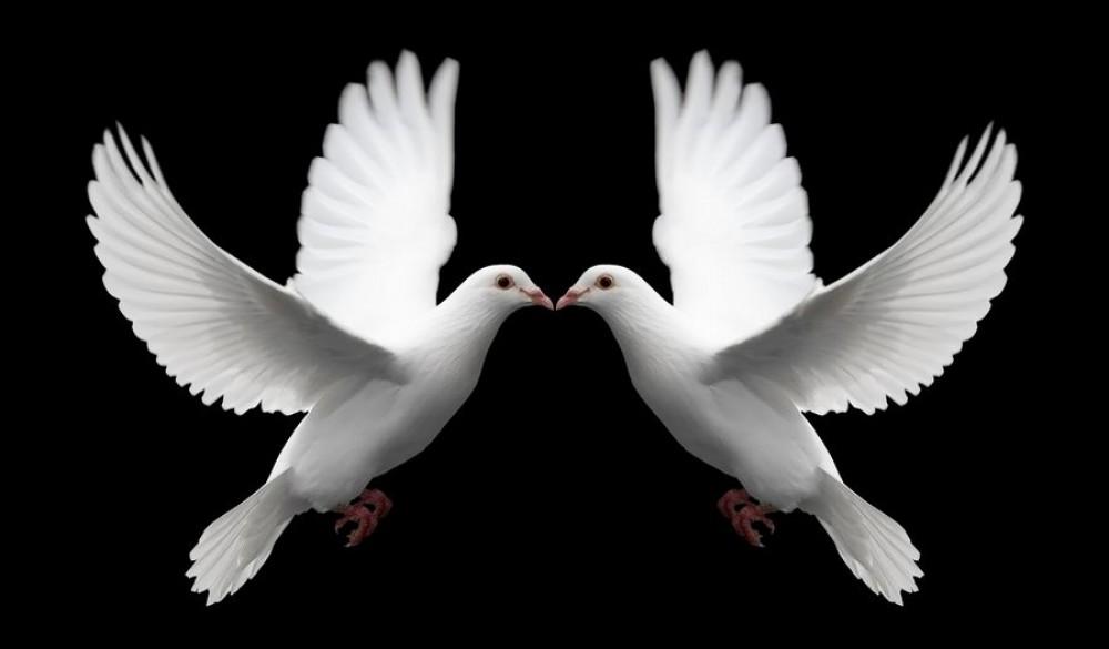 Memory Doves